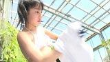 c4 - ボクの太陽/新原里彩